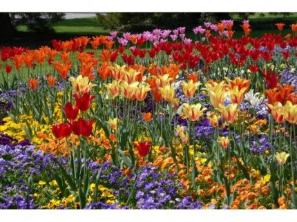 Jarní Nizozemsko v květu  Amsterodam, Volendam, květinový park Keukenhof